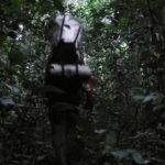 w lesie równikowym