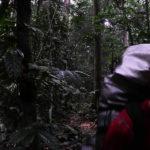 Kongo 2015 - przez las